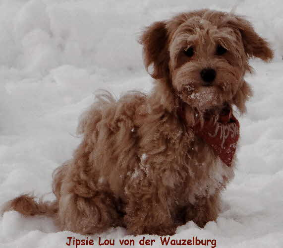 Jipsie Lou von der Wauzelburg